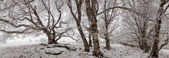 Arbres en hiver - Tirage photo