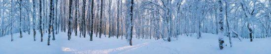 Forêt en hiver - Tirage photo