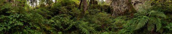 Nu dans les Tranchades, Cantal - Tirage photo